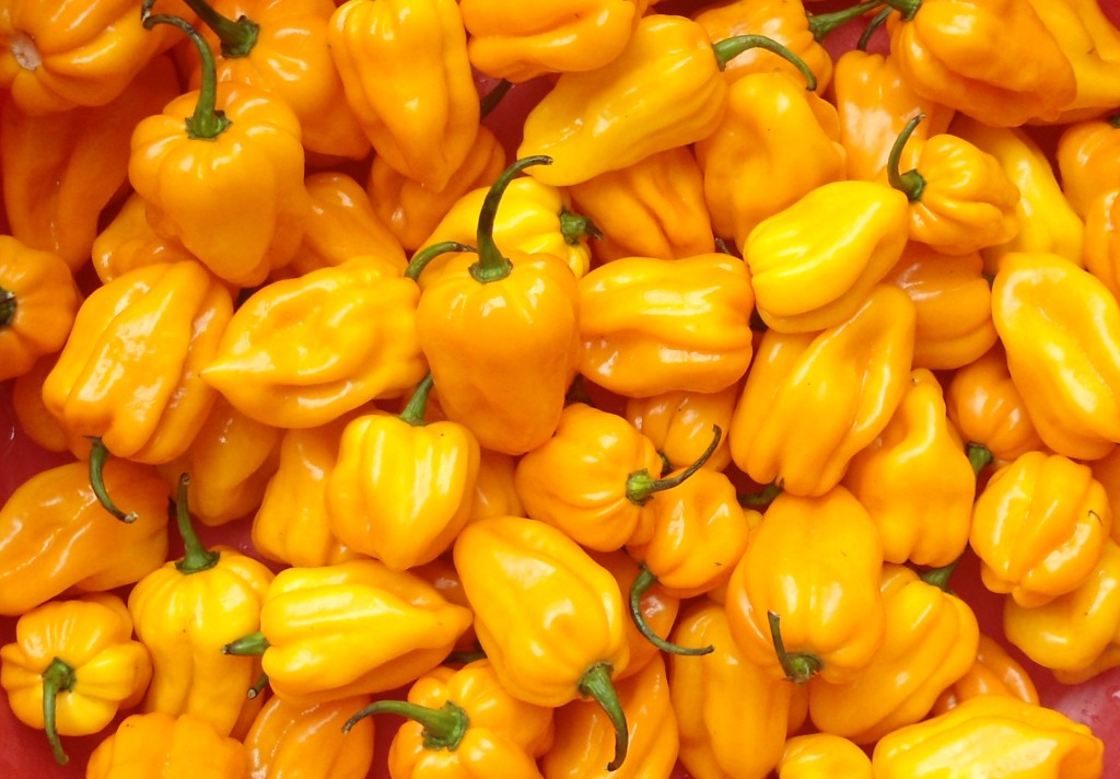 Capsicum_chinense_-_Hainan_Yellow_Lantern_Chili_-_03